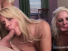 Blonde chesty cougars banged doggy style in foursome